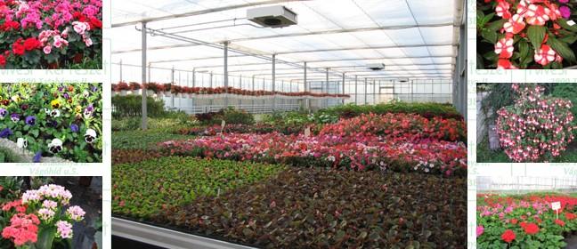 Füvesi Kertészet Tatabánya