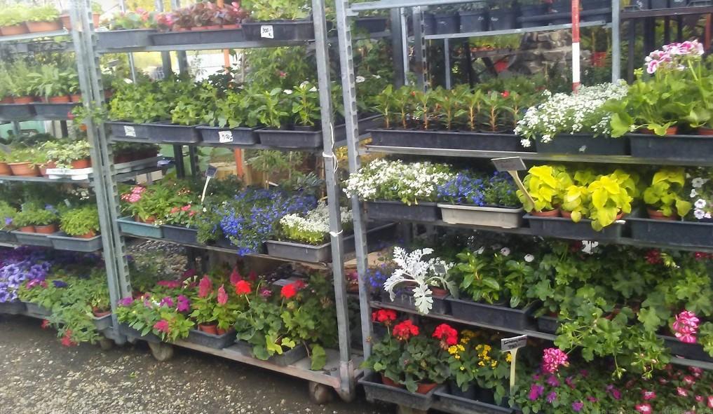 Hanga Kertészet Vác
