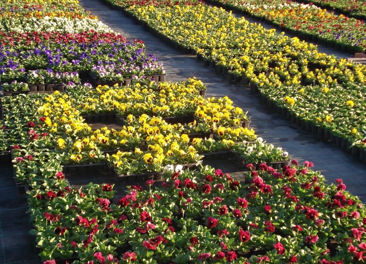 Ákos Virágkertészet